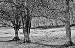 Bäume im Winter 2