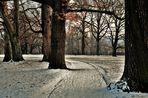 Bäume im Winter im Rosensteinpark