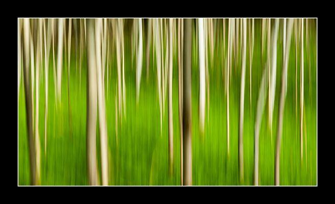 Bäume in Bewegung