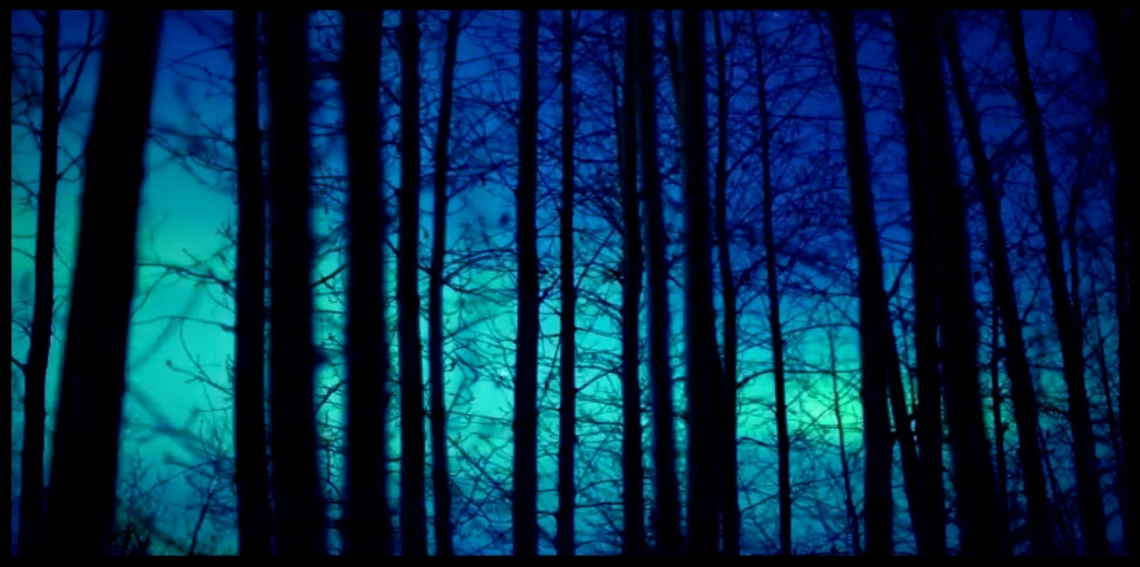 Bäume in Blau