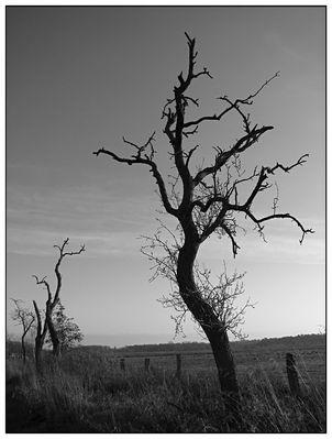 Bäume in den Rieselfeldern