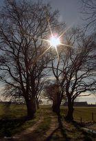 Bäume in der Mittagssonne