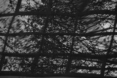 Bäume in der Spiegelung