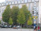 Bäume in der Stadt