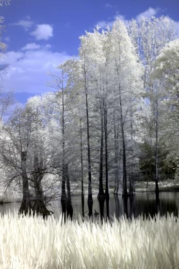 Bäume in Infrarot