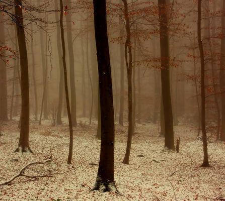 Bäume in Schnee und Nebel