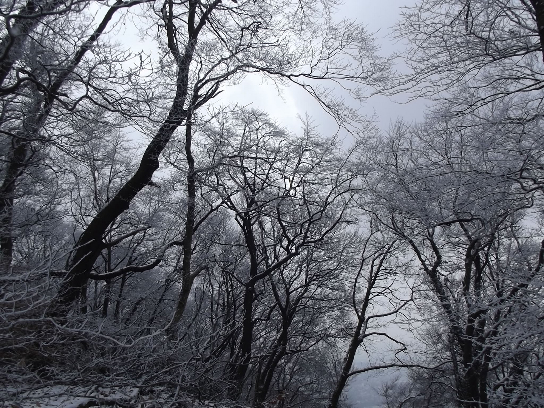 Bäume in Weiß