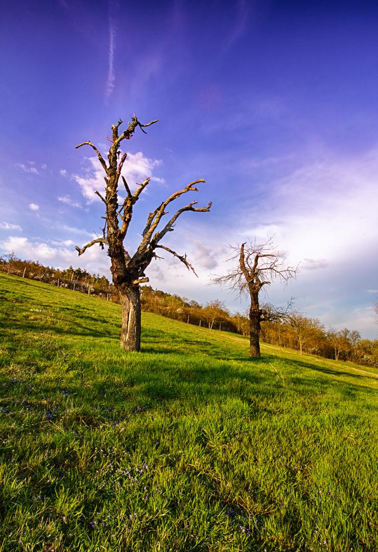 Bäume Leinach