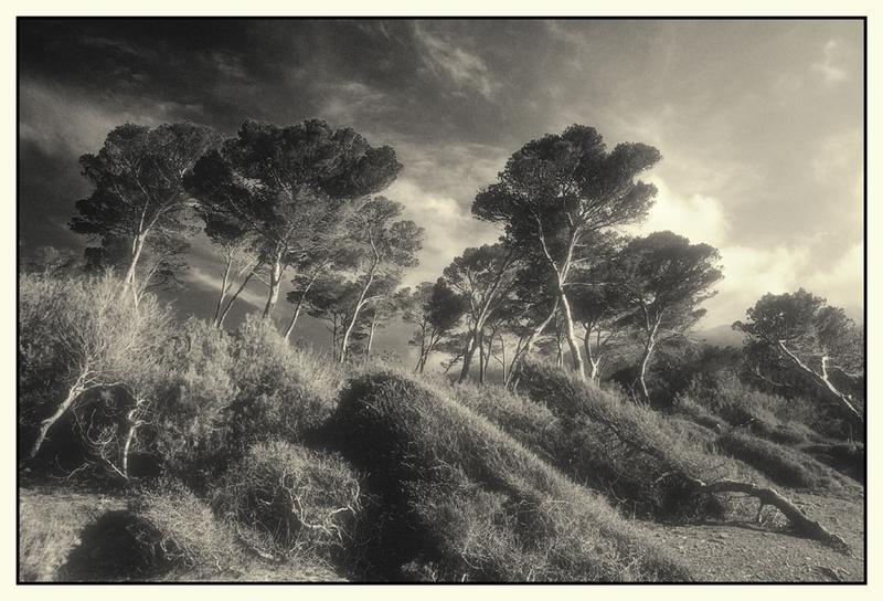 Bäume-Mallorca Westküste