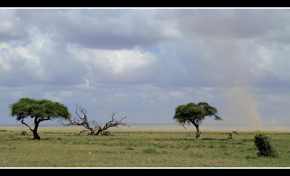 Bäume & mehr