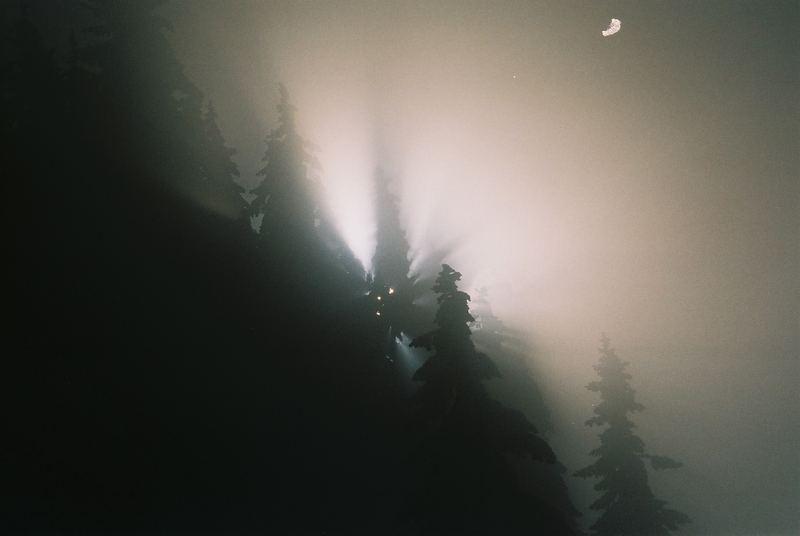 Bäume mit Gegenlicht