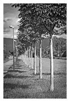 Bäume mit Laternen