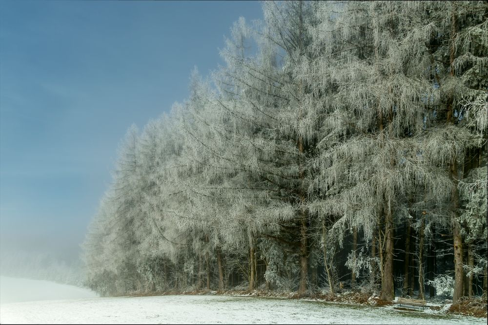 Bäume mit Schnee