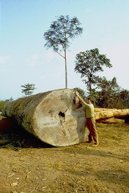 Bäume müssen sterben