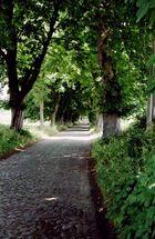 Bäume säumen den Weg