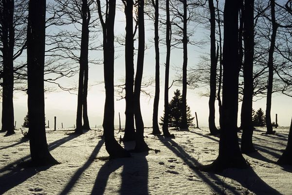 Bäume, Schatten, Winter