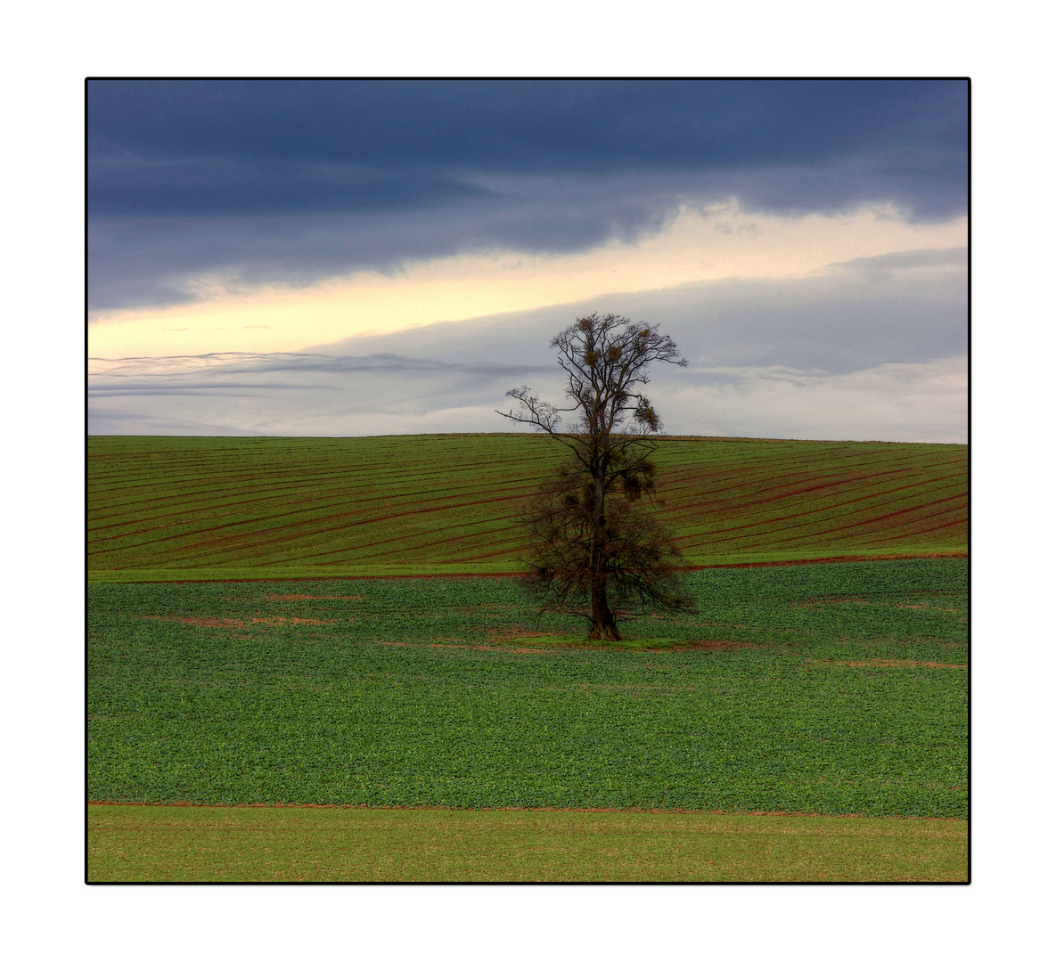 * Bäume sind Gedichte *