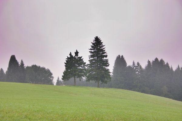 Bäume sind Träume