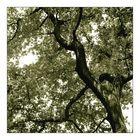 Bäume sind was herrliches