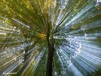 bäume - sinnbild des lebens........