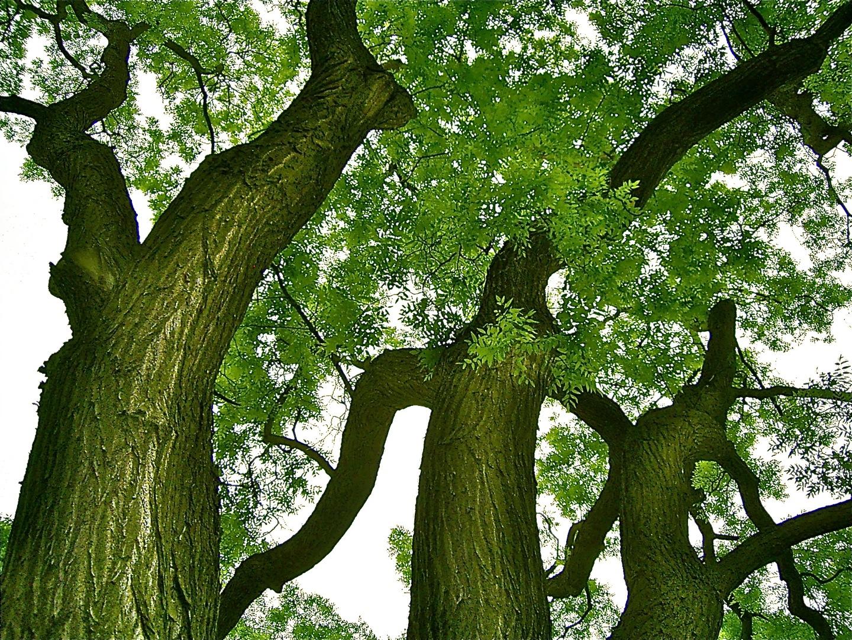 ... Bäume stehen niemals still ...