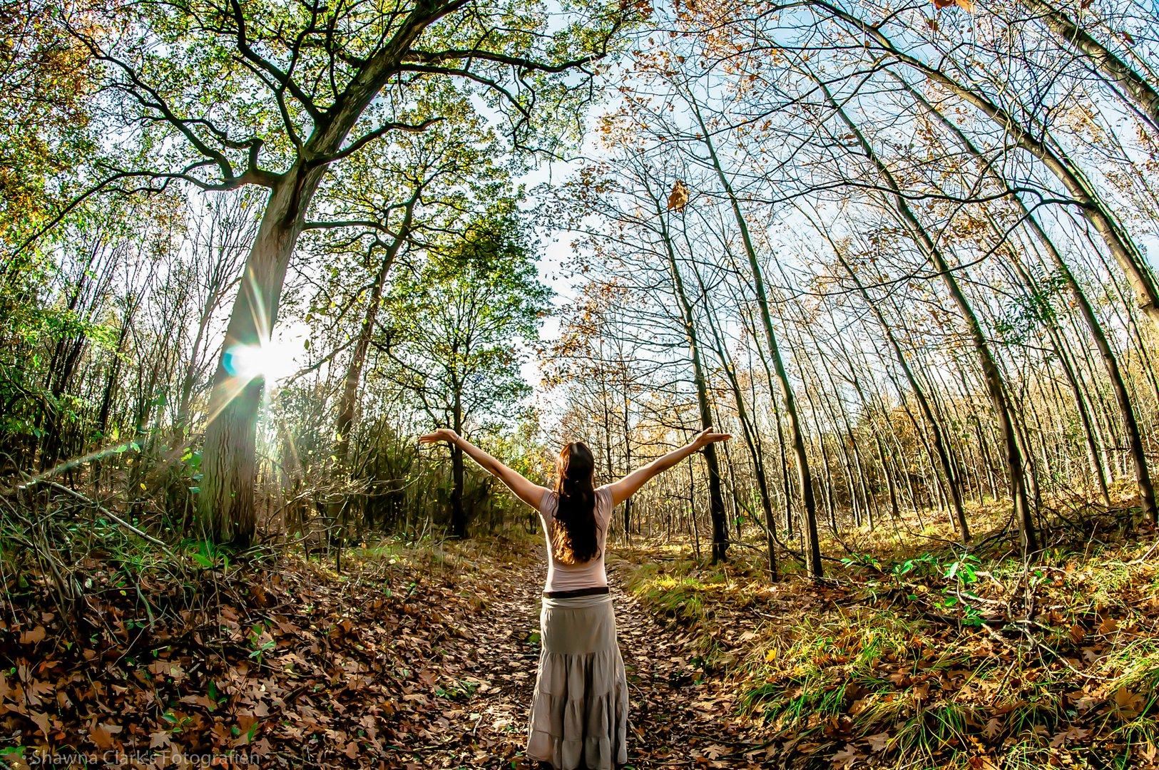 Bäume und das Licht