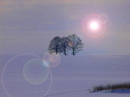 Bäume und Eis