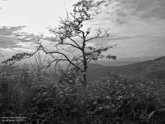 Bäume und Silhouetten