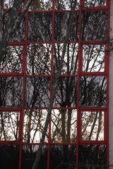 Bäume vor Fenster