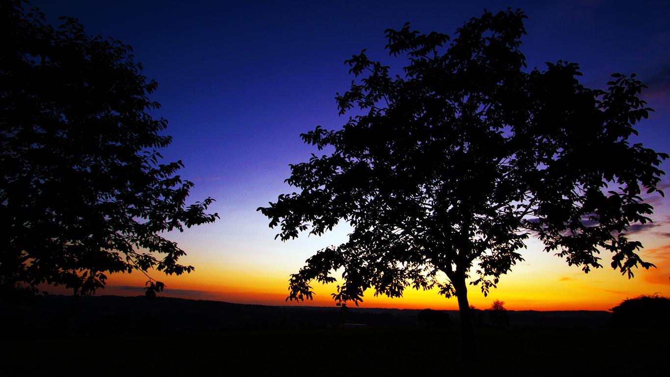 Bäume vor Sonnenuntergang