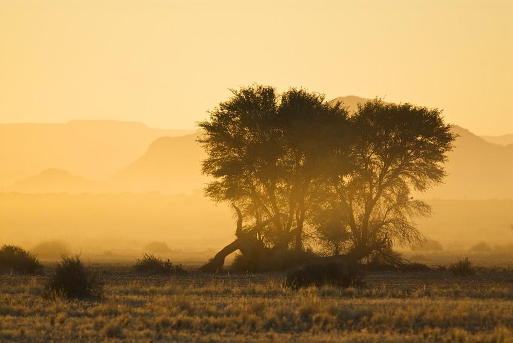 bäume vor tafelbergen 2 [namibia]