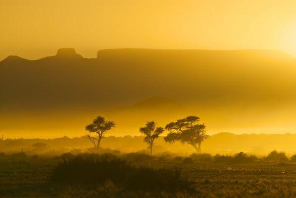 bäume vor tafelbergen [namibia]