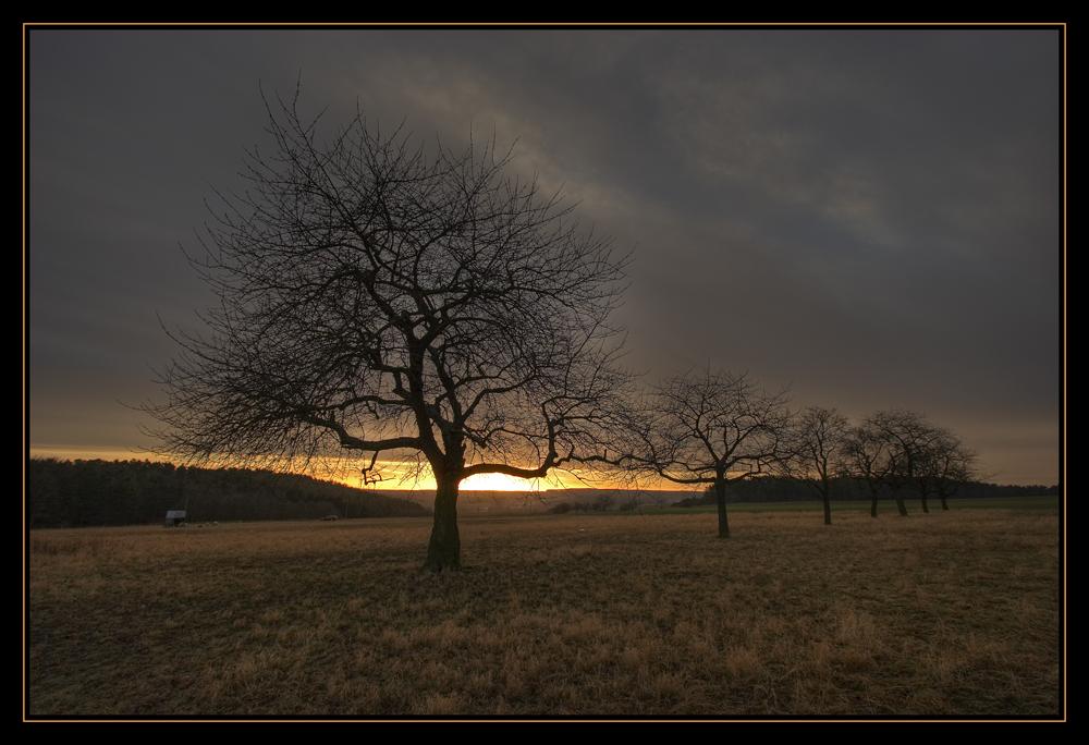 Bäume vor untergehender Sonne