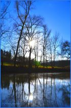 Bäume - Wasser
