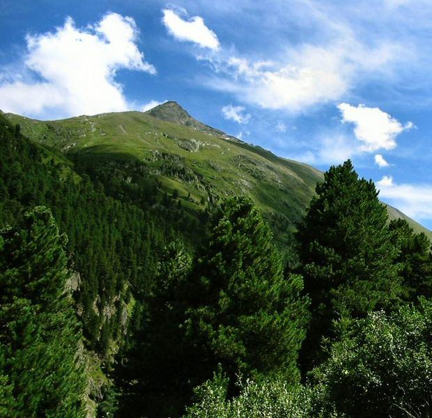 Bäume, Wiese und Himmel im Ötztal
