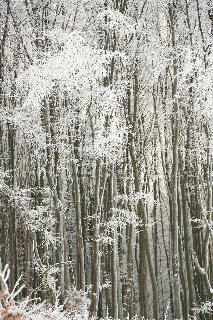 Bäume1