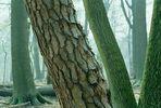Bäumen im Veluwezoom (Die Niederlande)