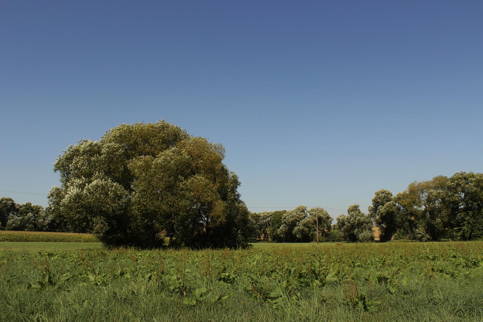 Bäume+Wiese
