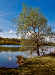 Baggersee Idylle 1