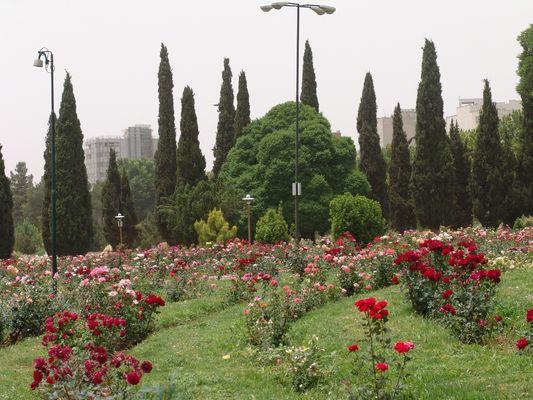 Bagh Eram Shiraz 2