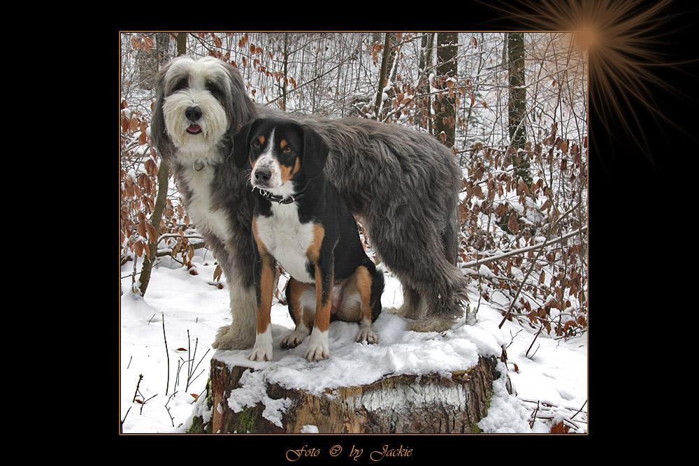 Bagheera und Sindy
