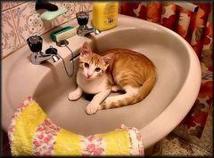 Bagno prego, foto NO!!!
