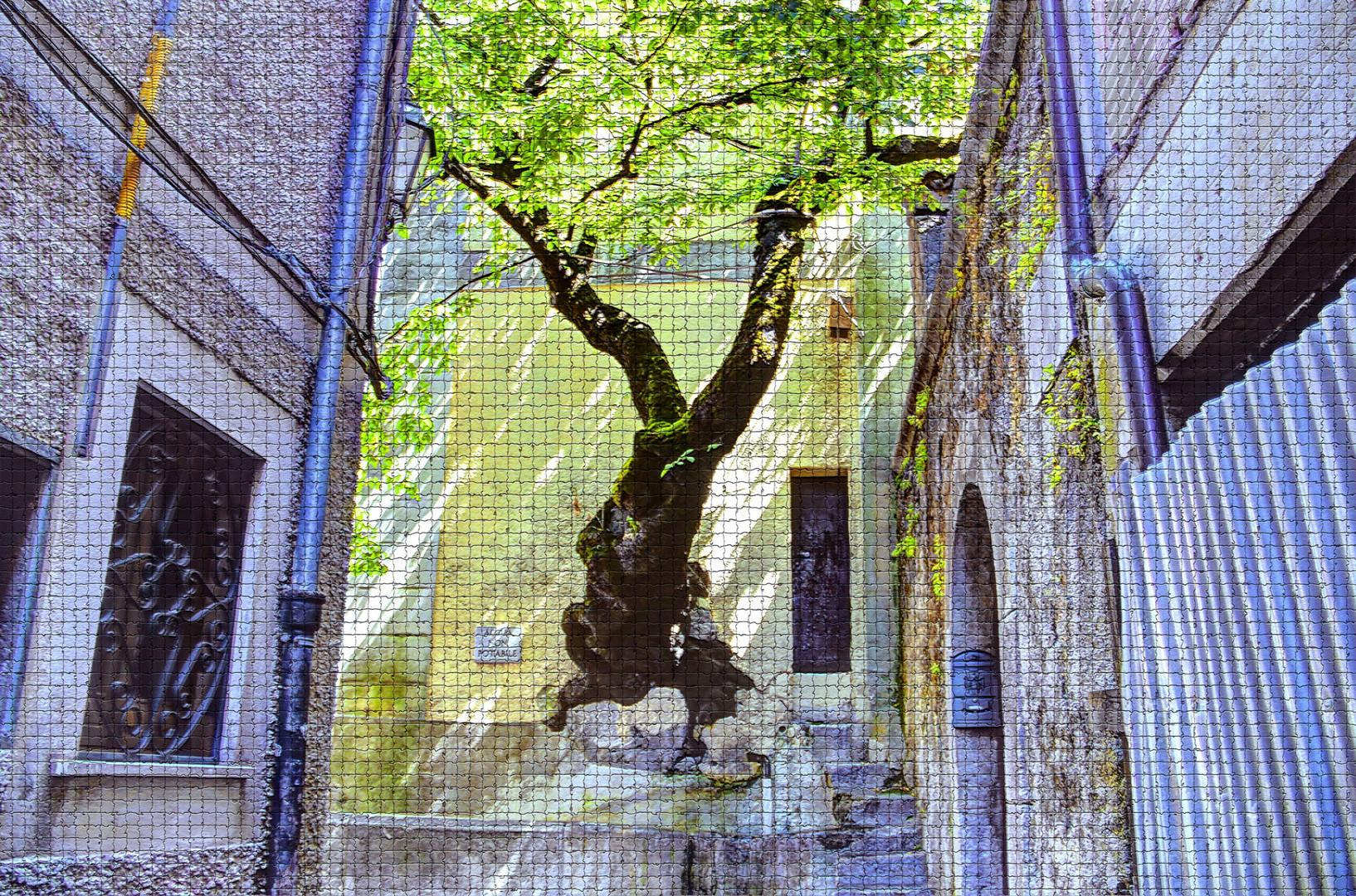 bagnoli irpino(av)-l'albero sulla fontana foto % immagini  piante ... - Fiori Bagnoli Irpino