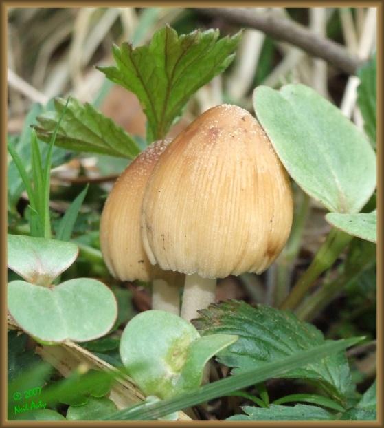 Bahar Fungi