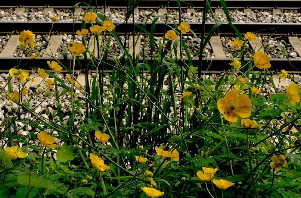 Bahn . Blumen .