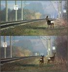 Bahn - Rehe