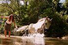 Baignade de La cavalière & Son poney
