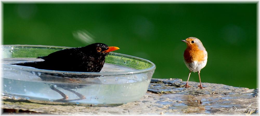 Baignoire pour un oiseau à la fois