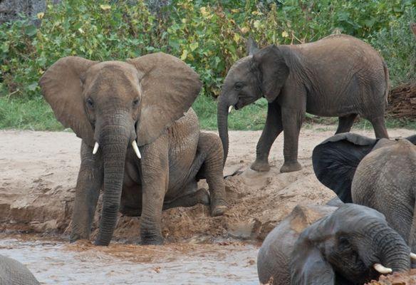 bain à Samburu