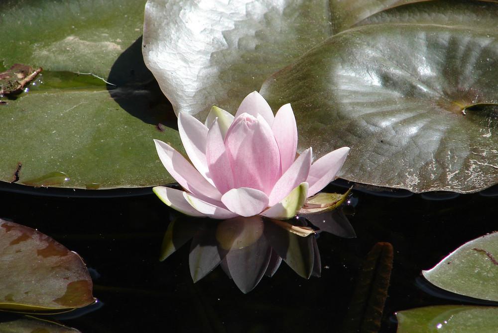 Bain de fleur